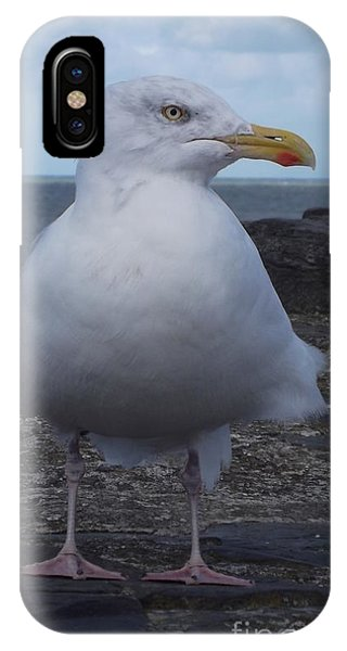 New Quay Gull  IPhone Case