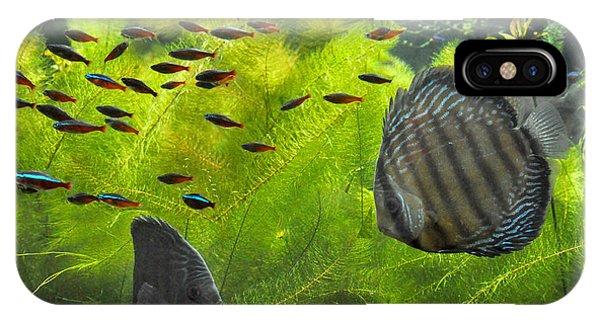 New York Aquarium Fish IPhone Case