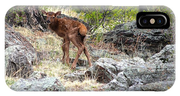 Newborn Elk Calf IPhone Case