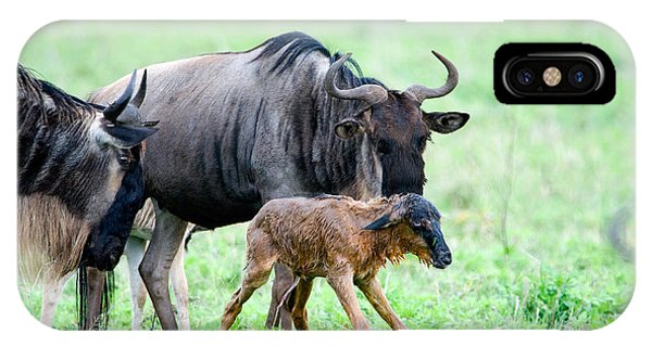 East Africa iPhone Case - Newborn Wildebeest Calf by Panoramic Images