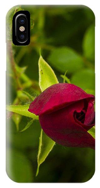 Newly Budding Rose Phone Case by Deborah Smolinske