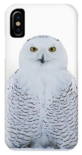Nh Seacoast Snowy Owl  IPhone Case