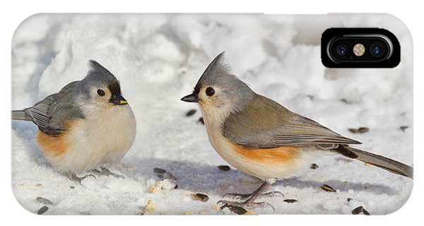 Nice Pair Of Titmice IPhone Case