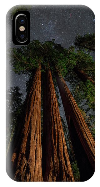 Kings Canyon iPhone Case - Night View Of Giant Sequoia Trees by Babak Tafreshi