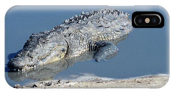 Crocodile iPhone Case - Nile Crocodile by Tony Camacho/science Photo Library