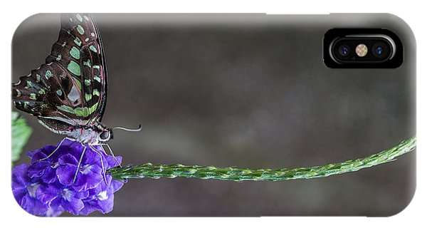Butterfly - Tailed Jay II IPhone Case