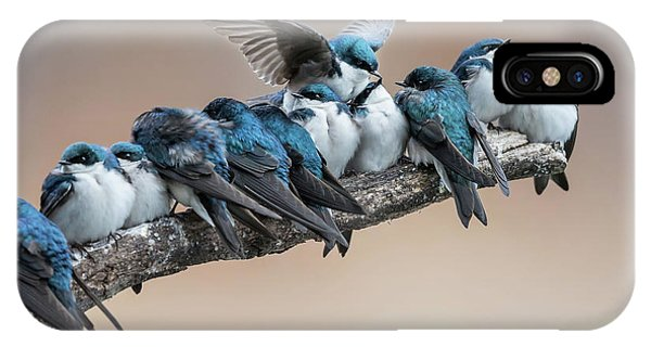 Swallow iPhone Case - No Room? No Problem. I Will Make Myself Some Room. by Cheng Chang