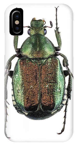 Noble Chafer IPhone Case