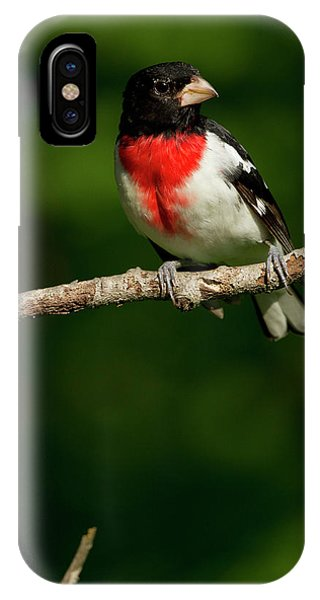 Deciduous iPhone Case - North America, Usa, Central by Joe and Mary Ann Mcdonald
