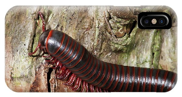 mcdonalds earthworms