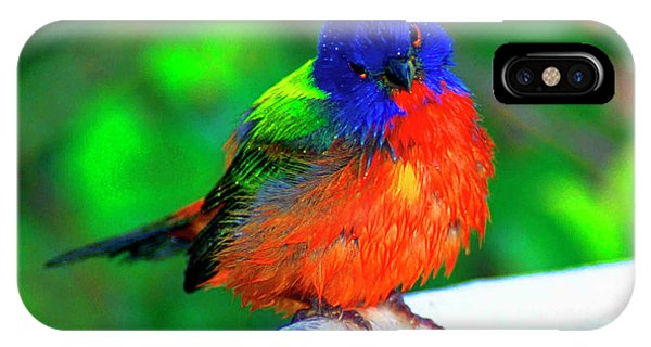Bunting iPhone Case - North America, Usa, Perplexed Painted by Bernard Friel