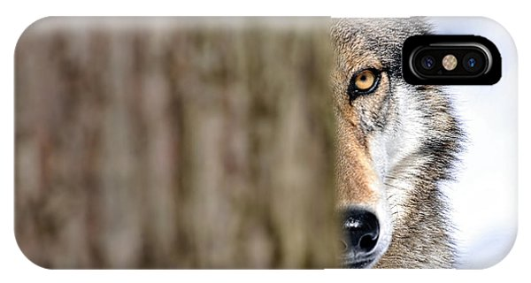 North American Gray Wolf Behind Tree IPhone Case