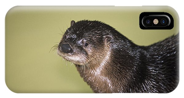 North American River Otter Phone Case by Sally Mccrae Kuyper/science Photo Library