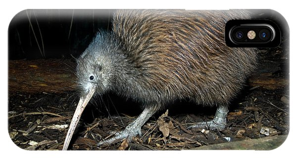 North Island Brown Kiwi Phone Case by Tony Camacho/science Photo Library