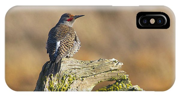 Northern Flicker iPhone Case - Northern Flicker by Sharon Talson