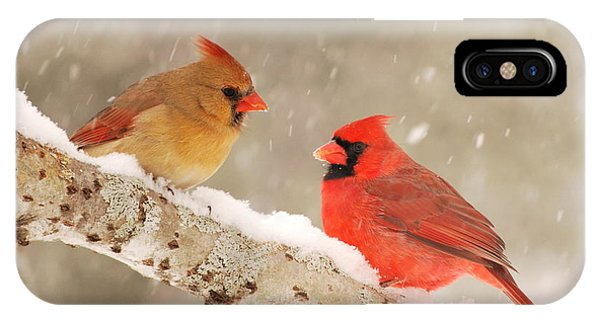 Northern Cardinals IPhone Case