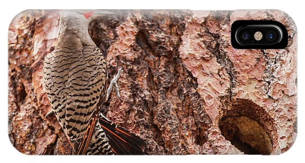 Northern Flicker iPhone Case - Northern Flicker Balanced On The Bark by Michael Qualls
