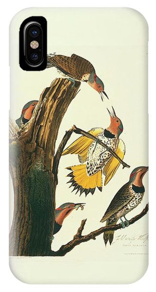 Northern Flicker iPhone Case - Northern Flicker Birds by Natural History Museum, London/science Photo Library