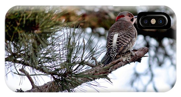 Northern Flicker iPhone Case - Northern Flicker by Carol Groenen