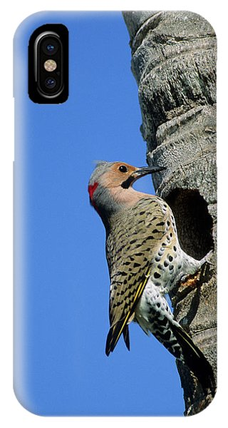 Northern Flicker iPhone Case - Northern Flicker (colaptes Auratus by Richard and Susan Day