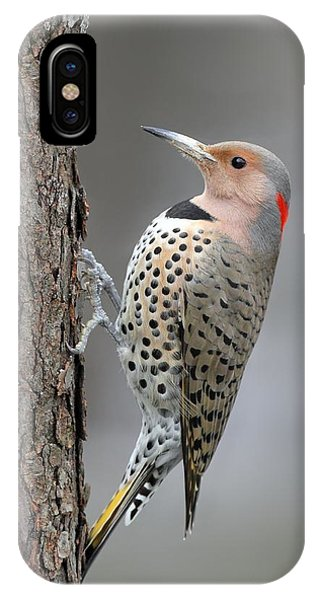 Northern Flicker IPhone Case