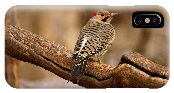 Northern Flicker iPhone Case - Northern Flicker II by Sandy Keeton