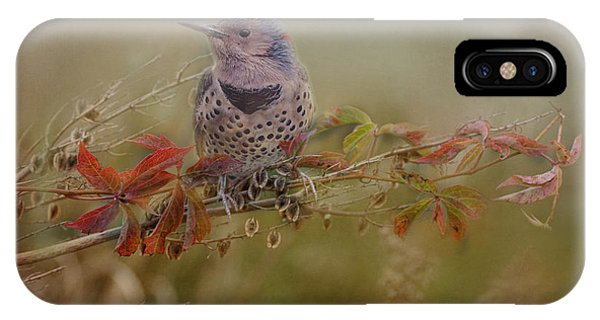 Northern Flicker iPhone Case - Northern Flicker In Fall Colors by Susan Capuano