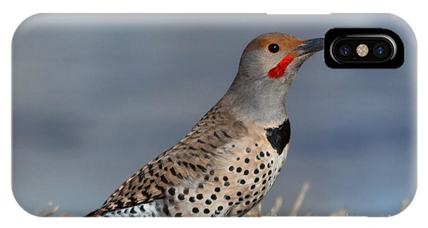 Northern Flicker iPhone Case - Northern Flicker by Kathleen Bishop