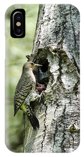 Northern Flicker iPhone Case - Northern Flicker Nest by Christina Rollo