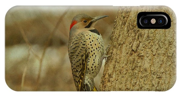 Northern Flicker iPhone Case - Northern Flicker On Tree by Sandy Keeton