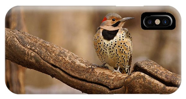 Northern Flicker iPhone Case - Northern Flicker by Sandy Keeton