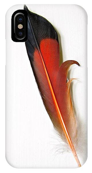 Northern Flicker Tail Feather IPhone Case