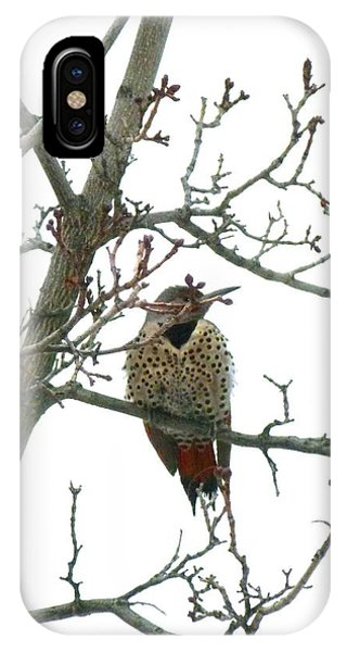 Northern Flicker iPhone Case - Northern Flicker Woodpecker by Will Borden