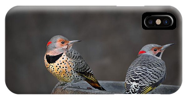 Northern Flicker iPhone Case - Northern Flickers by Bill Wakeley