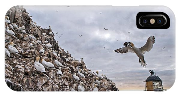 Northern Scotland iPhone Case - Northern Gannet Colony by Lewis Houghton/science Photo Library