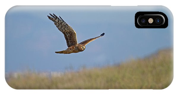 Northern Harrier In Flight IPhone Case