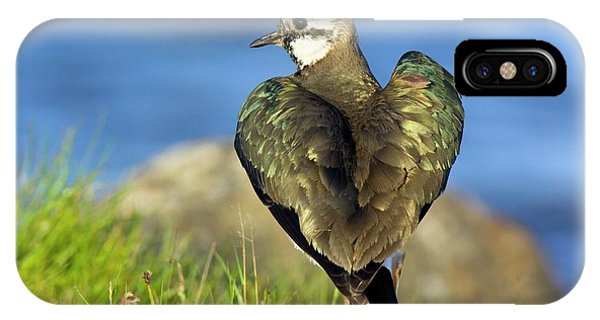 Northern Scotland iPhone Case - Northern Lapwing by Duncan Shaw/science Photo Library