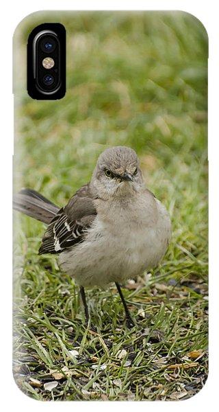 Northern Mockingbird IPhone Case