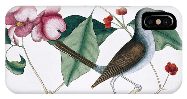 Mockingbird iPhone Case - Northern Mockingbird by Natural History Museum, London