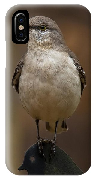 Northern Mockingbird IPhone Case