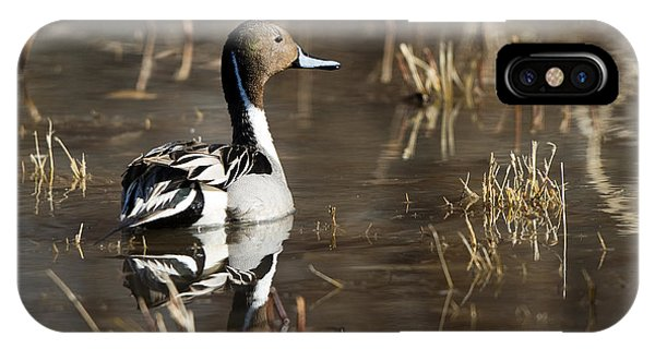 Handsome Northern Pintail IPhone Case