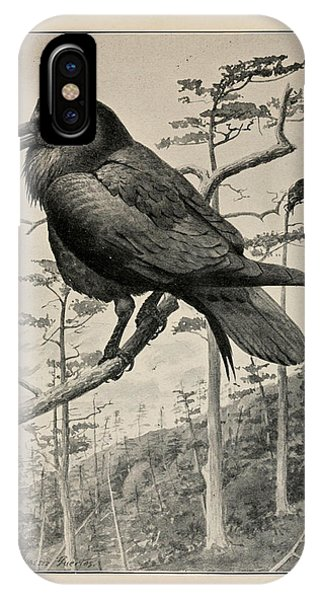 Raven iPhone Case - Northern Raven by Philip Ralley