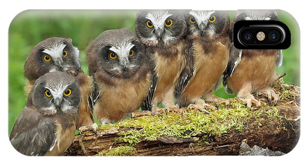 Northern Saw-whet Owl Chicks IPhone Case