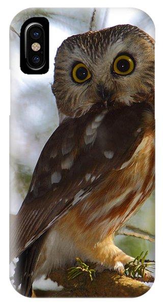 Northern Saw-whet Owl II IPhone Case