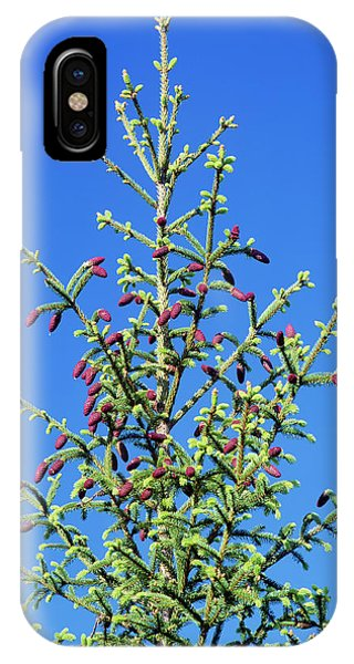 Spruce iPhone Case - Norway Spruce (picea Abies) by Bjorn Svensson/science Photo Library