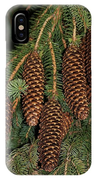Spruce iPhone Case - Norway Spruce (picea Abies) by Brian Gadsby/science Photo Library