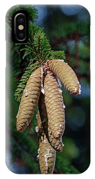 Spruce iPhone Case - Norway Spruce (picea Abies) by Dr. Nick Kurzenko