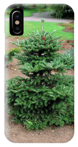 Spruce iPhone Case - Norway Spruce by Ron Bonser/science Photo Library