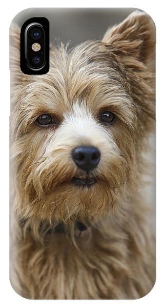 Norwich Terrier iPhone Cases | Fine Art America