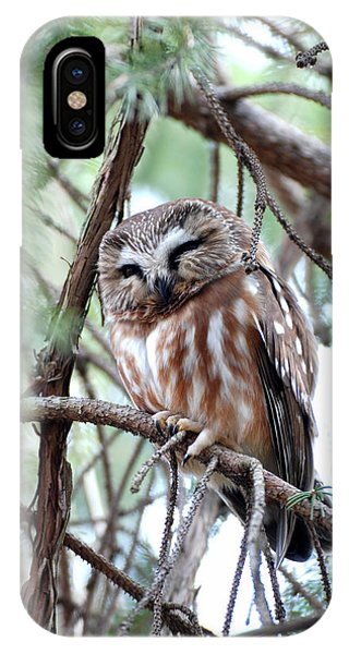 Northern Saw-whet Owl 2 IPhone Case